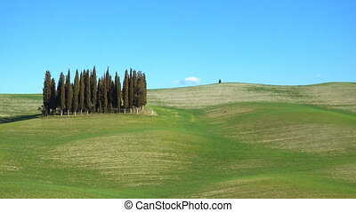 famous cypress island at the Siena region