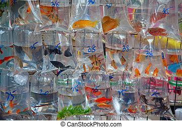 """Fish market"""