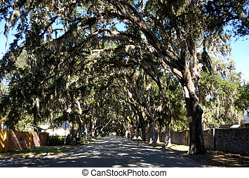 One of the most photographed streets in the United states. The magnolias for which the street is named died out many years ago and the majestic oaks have taken over and are now adorned with the air plant Spanish Moss. Famous attraction at St. Augustine Florida