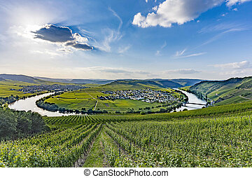 famous Moselle river loop in Trittenheim
