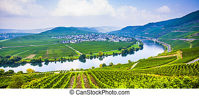 famous Moselle Sinuosity with vineyards - famous Moselle...