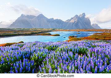 Famous Stokksnes mountains