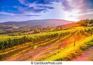 Tuscany vineyards - Famous Tuscany vineyards near the...