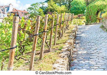 Famous vineyard on Montmartre, Paris. Tourist landmark place