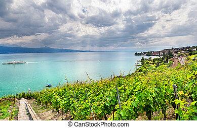 Famouse vineyards in Geneva lake