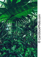fan palm leaf and other tropical plants