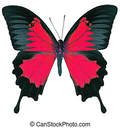 fancy butterfly isolated on white - Beautiful red butterfly,...