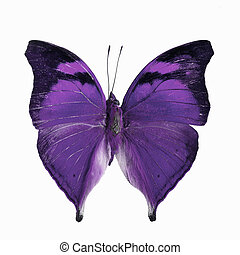 fancy butterfly isolated on white - Purple butterfly, Autumn...