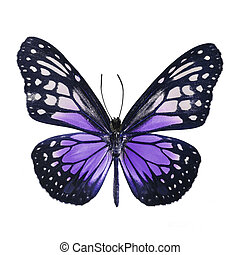 fancy butterfly isolated on white - Purple butterfly, Yellow...