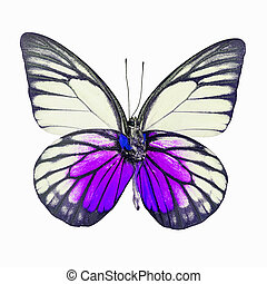 fancy butterfly isolated on white - Yellow and purple...