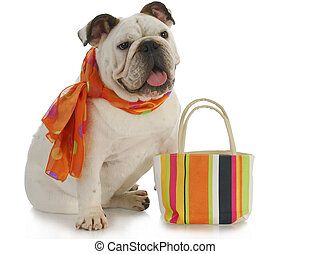 fancy dog - english bulldog wearing silk scarf with matching...