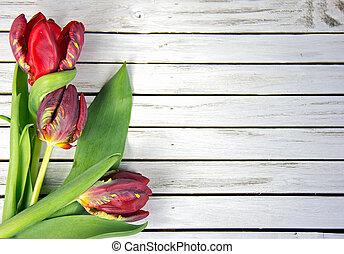 fancy red tulips on wood