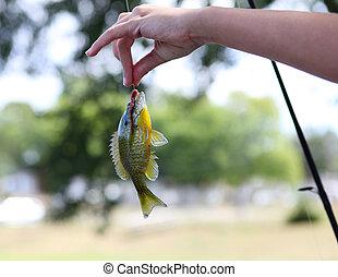 fangen fisch