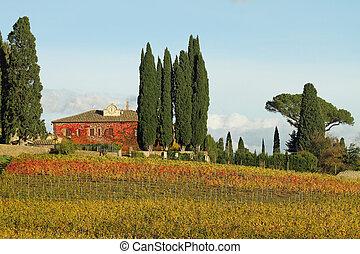 fantástico, toscano, paisaje, con, viñas, en, otoñal,...