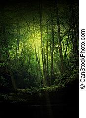 fantasía, bosque