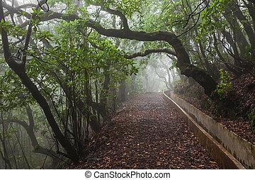 fantasía, bosque, madeira, isla