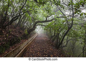 fantasia, floresta, madeira, ilha