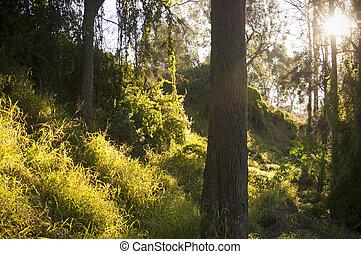 fantasia, foresta