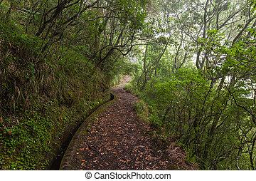 fantasia, foresta, madera, isola