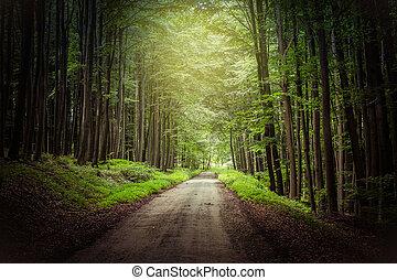 fantasia, foresta, percorso