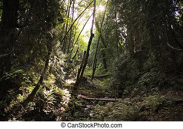 fantasia, foresta, ponte