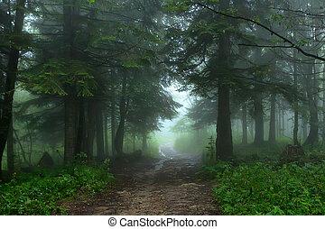fantasia, nebuloso, floresta