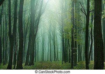 fantasie, forest.