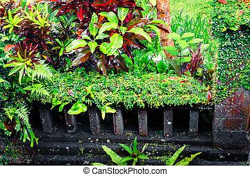fantasie, tropische , betriebe, in, moosig, kleingarten