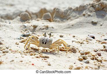 fantasma, su, sabbia, granchio, chiudere, spiaggia bianca