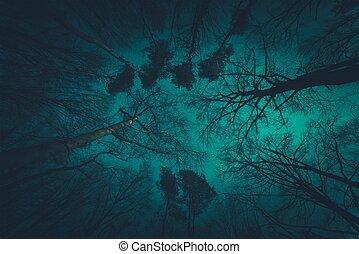 fantasmal, dosel de bosque