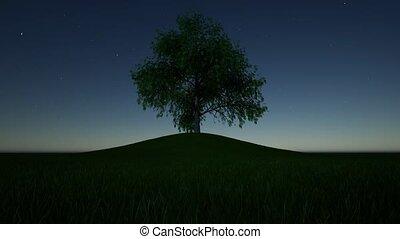 fantasme, design., arbre, étoilé, papier peint, nuit