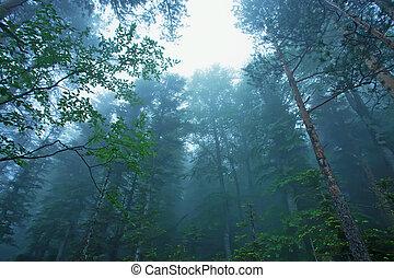 fantasme, forêt, brumeux