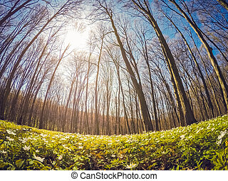 Fantastic anemone flowers - Fantastic forest with fresh...