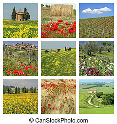 fantastic  flowering Tuscan fields collage