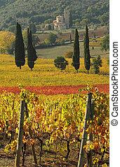 fantastic landscape of tuscan vineyards in autumn, at...