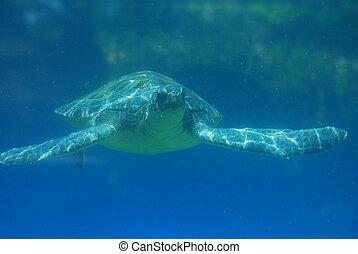 Fantastic Look at Sea Turtle Swimming Underwater