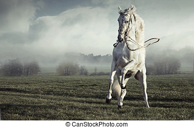 Fantastic picture of strong pure white horse - Fantastic...