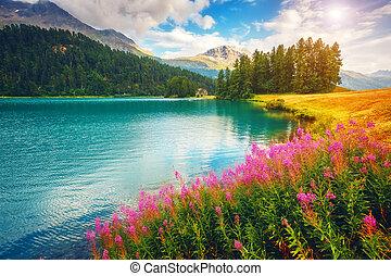Fantastic summer scene - Fantastic view of the azure pond...