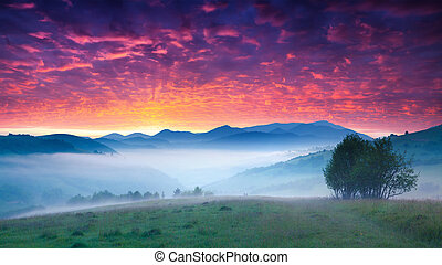 Fantastic summer sunrise in the Carpathian mountains