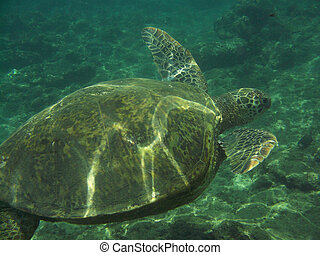 Fantastic View of a Sea Turtle Underwater