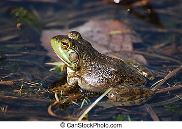 Fantastic View of a Toad in Shallow Water