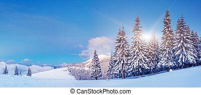 winter - Fantastic winter landscape. Blue sky. Panoramic...