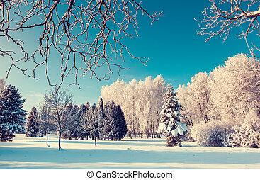 winter - Fantastic winter landscape. Ukraine, Europe. Beauty...