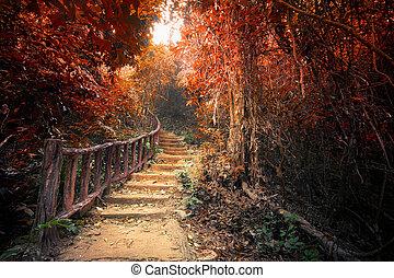 Fantasy autumn forest with path way through dense trees -...