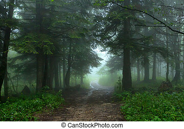 Fantasy foggy forest - Scenic view of mysterious lush foggy...