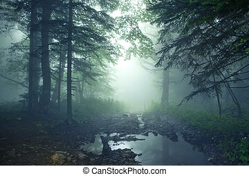 Fantasy forest - Beautiful fantasy landscape of mysterious...