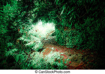 Fantasy landscape of tropical jungle forest with tunnel and path way