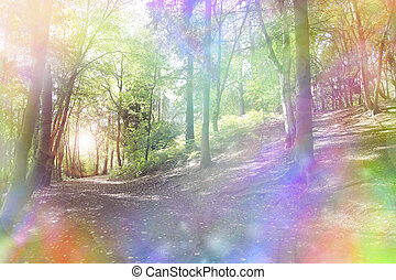 Fantasy rainbow bokeh woodland - Woodland path and light...