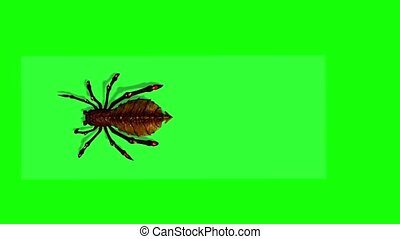 fantasy spider appears and runs past with shadow on the ...
