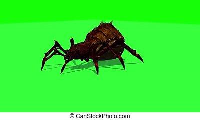 fantasy spider dies - green screen